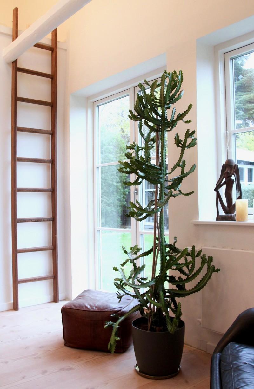 kaktus stueplanter